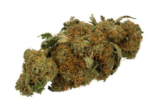Buy cannabis seed