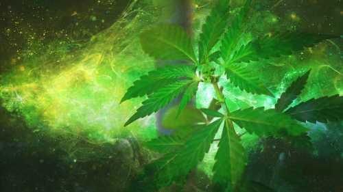 cheap-cannabis